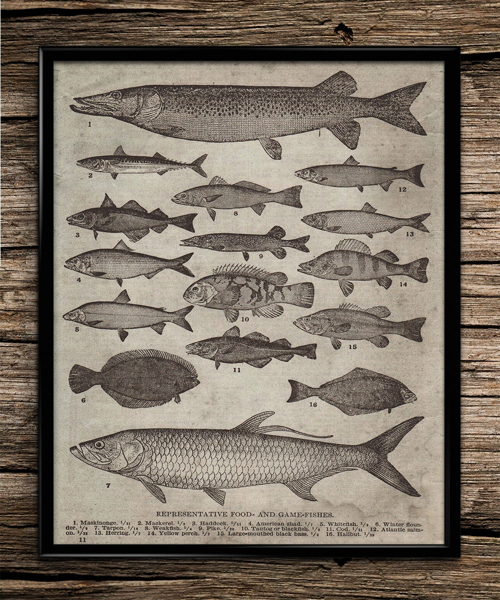 Vintage breeds of fish fishing poster fishing by for Fishing decor for man cave