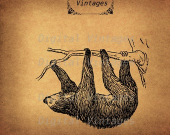 Sloth in Tree Toed Animal Royalty Free Illustration Vintage Antique Digital Image Download Printable Clip Art Prints 300dpi svg jpg png