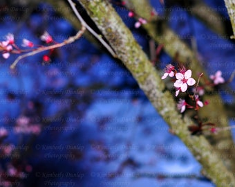 Fine Art Cherry Blossom Photograph {Spring Flower Photo, Floral Photograph, Pink Blue Picture, Nursery Nature Print, Tree Bud Bloom Blossom}