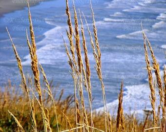 Fine Art Seaside Photograph {Coastal Photo, Ocean Photography, Coast Picture, Sea Shore Print, Blue Gold Golden Grass, Nautical Beach Decor}
