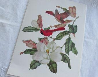 Bird and Botanical Print - Cardinals and Magnolias - Athos Menaboni