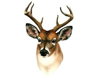 Watercolor Deer Portrait- art print woodland nursery art watercolor art animal art animal watercolor wall art brown white grey 5x7 8x10...