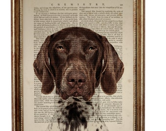 German Shorthaired Pointer Dog, beautiful Art Print on Upcycled Dictionary Book page 8'' x 10'' inches