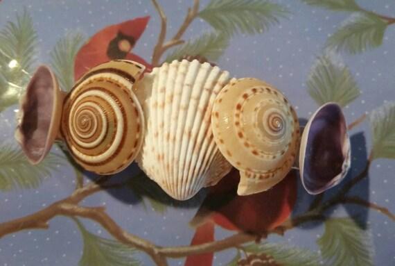 Seashell hair clip seashell hair barrette coastal hair clip for Seashells for hair
