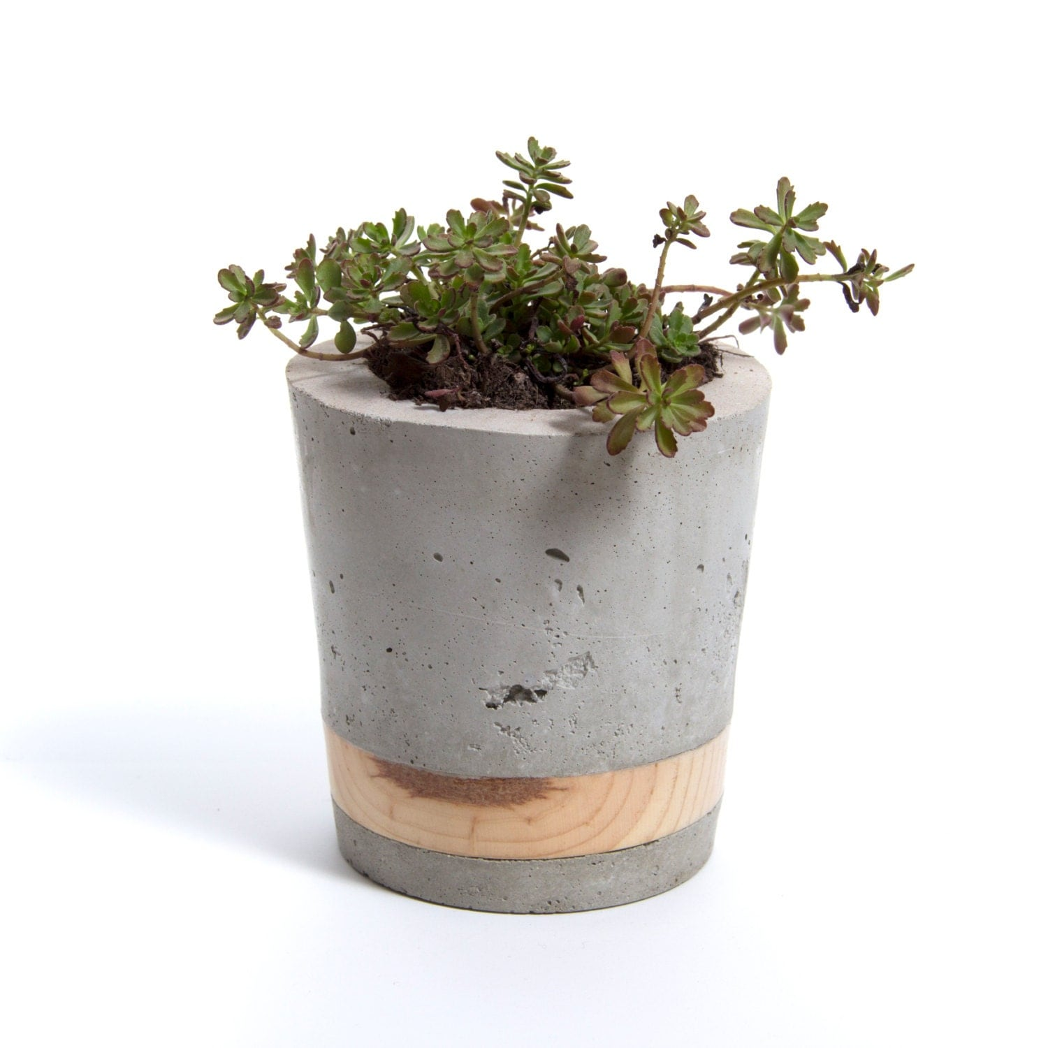 Large Concrete Planter Pine Band