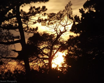 Sunset, Photo, Print, Photography