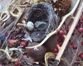 Nature Mix Seed Pods, Shells, Bird Nest, Wood, Feathers, Cactus Skeleton Craft Jewelry Supply Found Objects
