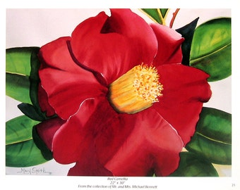 Flower Print - Red Camellia - Botanical Print -1996 Naturalist Book Page - 12 x 9