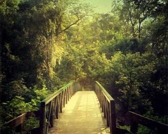 The Journey Starts With a Single Step, tree print, woodland art, bridge, green, nature photo, landscape photography, dorm decor, dreamy