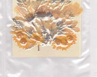 Real pressed flowers designer pack - YELLOW