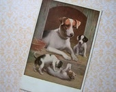 Antique Jack Russell / Terrier dog postcard, 1920s