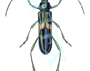 Beetle number 3 Insect Blank Note Card Handmade