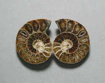fossil AMMONITE cabochons matching pair two 28X36mm designer cabs