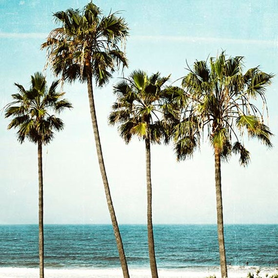 Palm Tree Photography Ocean Landscape California Beach Art
