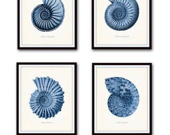 Indigo Blue Nautilus Shell Print Set, Ernst Haeckel, Giclee, Art Prints, Posters, Nautical Art, Coastal Decor, Seashell Prints, Blue