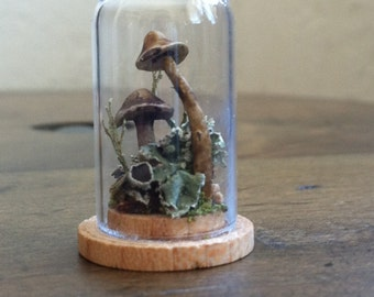 Minute gossamer terrarium