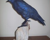 Raven Carving - Hand Carved Raven ~Baltimore Ravens Fan, Birthday, Carved Bird, Christmas Gift