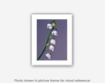 Flower Photography, Lily of the Valley Photographs, Photos, Prints, Purple, Wall Art, Home Decor, Blank Photo Greeting Cards, Still Life