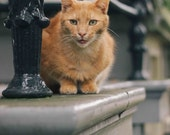 Cats of Amsterdam - Joe - Photography