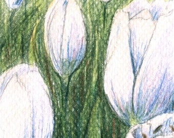 Original Drawing ACEO ATC with white tulips