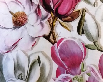 Two (2) Magnolia Flowers, Pink Flowers, White Flowers, Paper Hostess Napkins for Decoupage and Paper Crafts