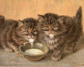 1905 M Stocks Tabby Kittens/Cats with Milk Postcard