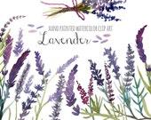 Lavender clip art, floral clip art, hand painted watercolor clip art, 28 PNG  files (5126)
