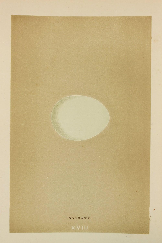 goshawk eggs reverend morris 1851 original antique bird egg