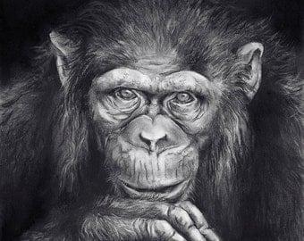 Mr. Albert Clyde (chimpanzee)