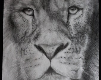 Aslan Drawing Print