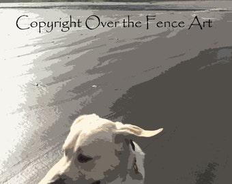 Yellow Labrador Card Windy Ears Dog Photography