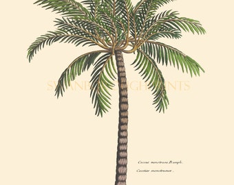 Print of Palm Tree. Beach home Palm Tree Wall Art Decor. Natural History Engravings of Tropical Palm Trees. Palm Tree Print