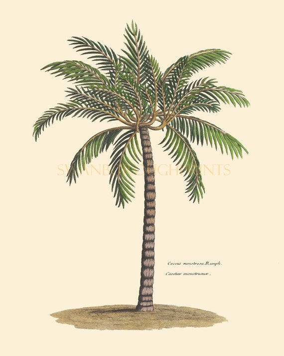 Print of palm tree beach home palm tree wall art decor for Palm tree decorations for the home
