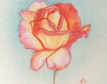 Rose Flower Colored Pencil Drawing Original Flower Pencil Art