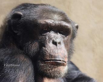 Gorilla, Ape, wall art, photograpy, photo, print,  animals, home decor, free shipping