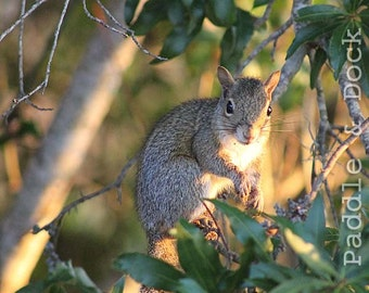 Squirrel in tree, Instant Download