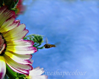 Flower and flying bug - Nature photography print
