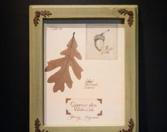 Framed White Oak Leaf Print