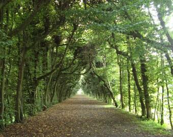 Garden walkway photograph