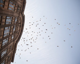 Riga, Latvia, Old Town, Blue Sky, Birds, Flying, Building, Architecture, Photography, Photo, Fine Art, Print,