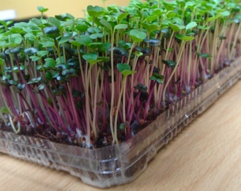 Microgreens Mix-Red Cabbage & Rocket