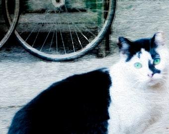 Fine Art Photography Print Greeting Card, Cat