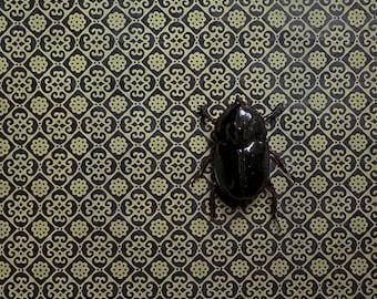 Photographic Print - Insectum Series - Insectum 1