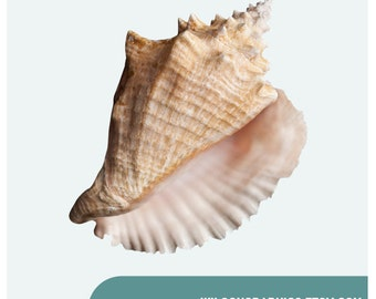 """Large Conch Shell Wall Decal - Design 2 - 6.5"""" x 9"""""""