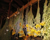 SUNFLOWER naturally DRiED Flower Bunches