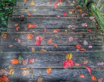 FALL MORNING - Leaves, Autumn, Colorful, Wood Steps, Garden, Beautiful, Dorm Art, Office Decor, Outdoors, Contemporary Art Print, Leaf, Cold