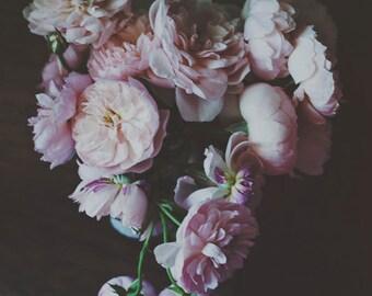 Still Life Photography -Dark Botanical Print Floral Black Wall Art Moody Romantic Home Decor English Roses Print Modern Fine Art Photography
