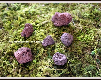 Lava rocks in miniature-terrarium supplies-dinosaur rocks-bag of 6 small lava rocks-red rocks bumpy rocks-holey rocks