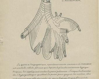 Hypogastric Sheath, Human Anatomy Print 12, 1947, Vintage Medical Anatomy Art, Medical Diagram Geek Art Print Medical Student Gift
