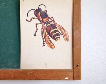 Vintage School Flashcard- Wasp